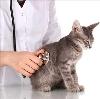 Ветеринарные клиники в Котовске